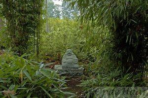 Bamboe path