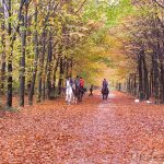 the longest beech avenue in the Netherlands