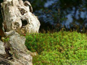 Moss en boomstam - bosplanten
