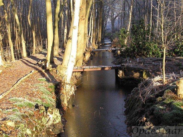 Rabatten bos in OpdeHaar gardens