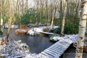 Woodland garden in winter