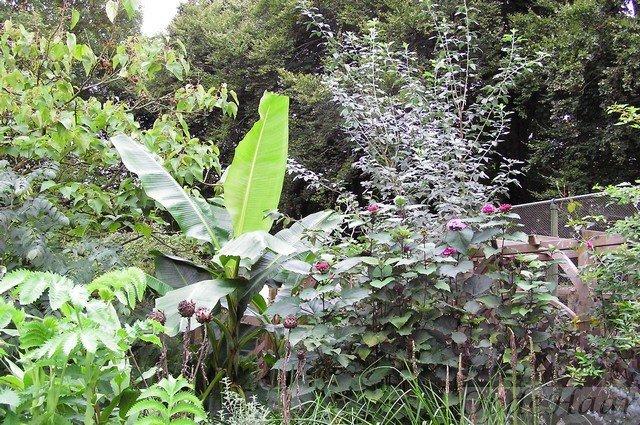 Tropische tuin