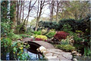 Pond and rockery