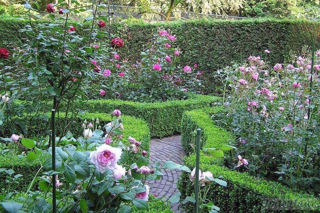 Rozen tuin