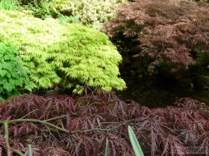 Acers round pond