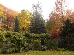 Pergola, Liriodendron + Abies grandis in Autumn