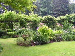Summer borders  in June