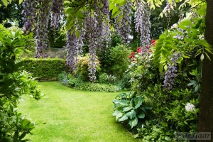 Summer borders and wisteria
