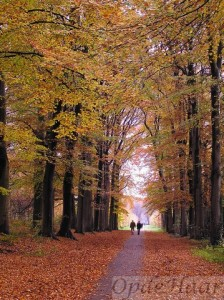 Beech trees in avenue just outside our house. The longest beech avenue in The Nerherlands)