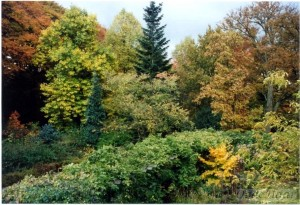Autumn colours of beeches, liliodendron, tillia, abies grandis, hamamelis