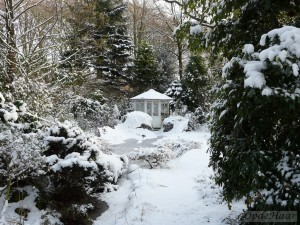 Pond in snow